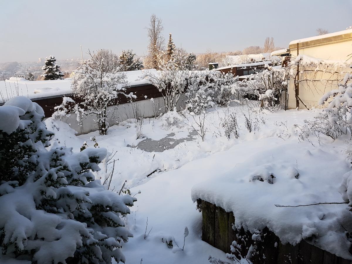 Vertrocknetes gibt auch im Januar Struktur