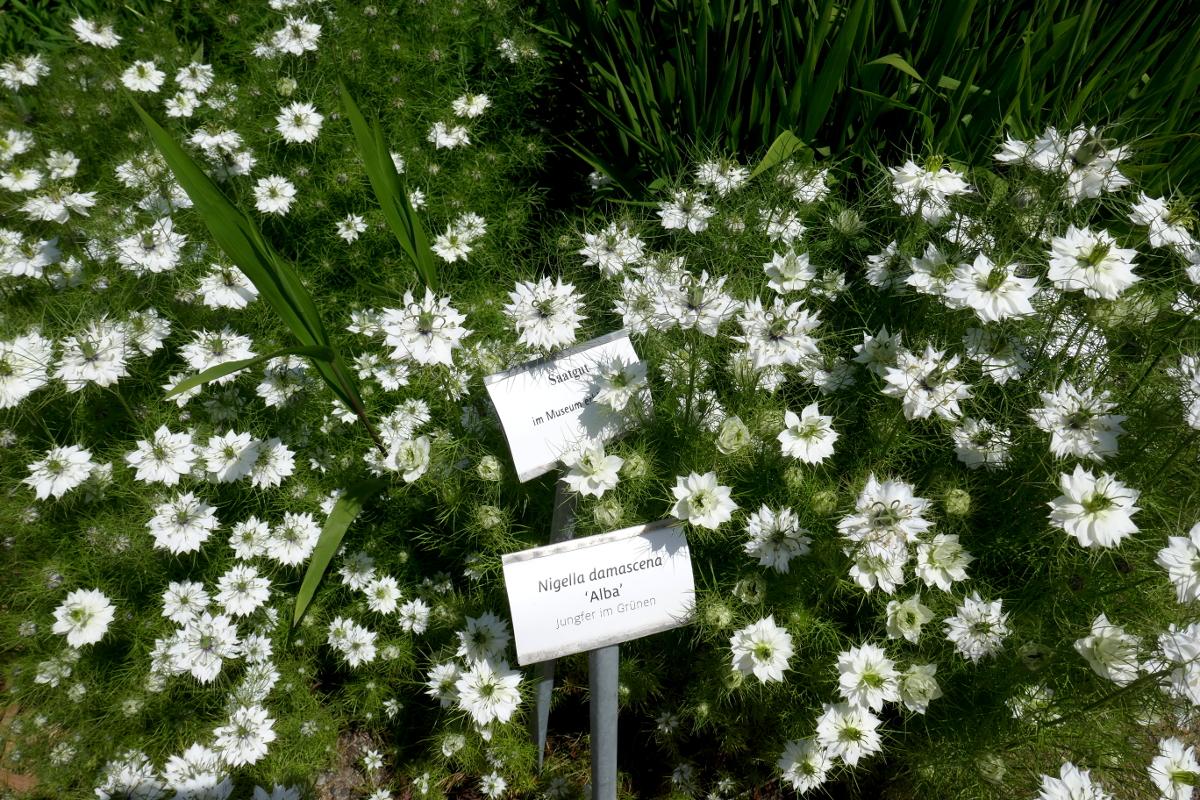 Diese Blüten passen überall
