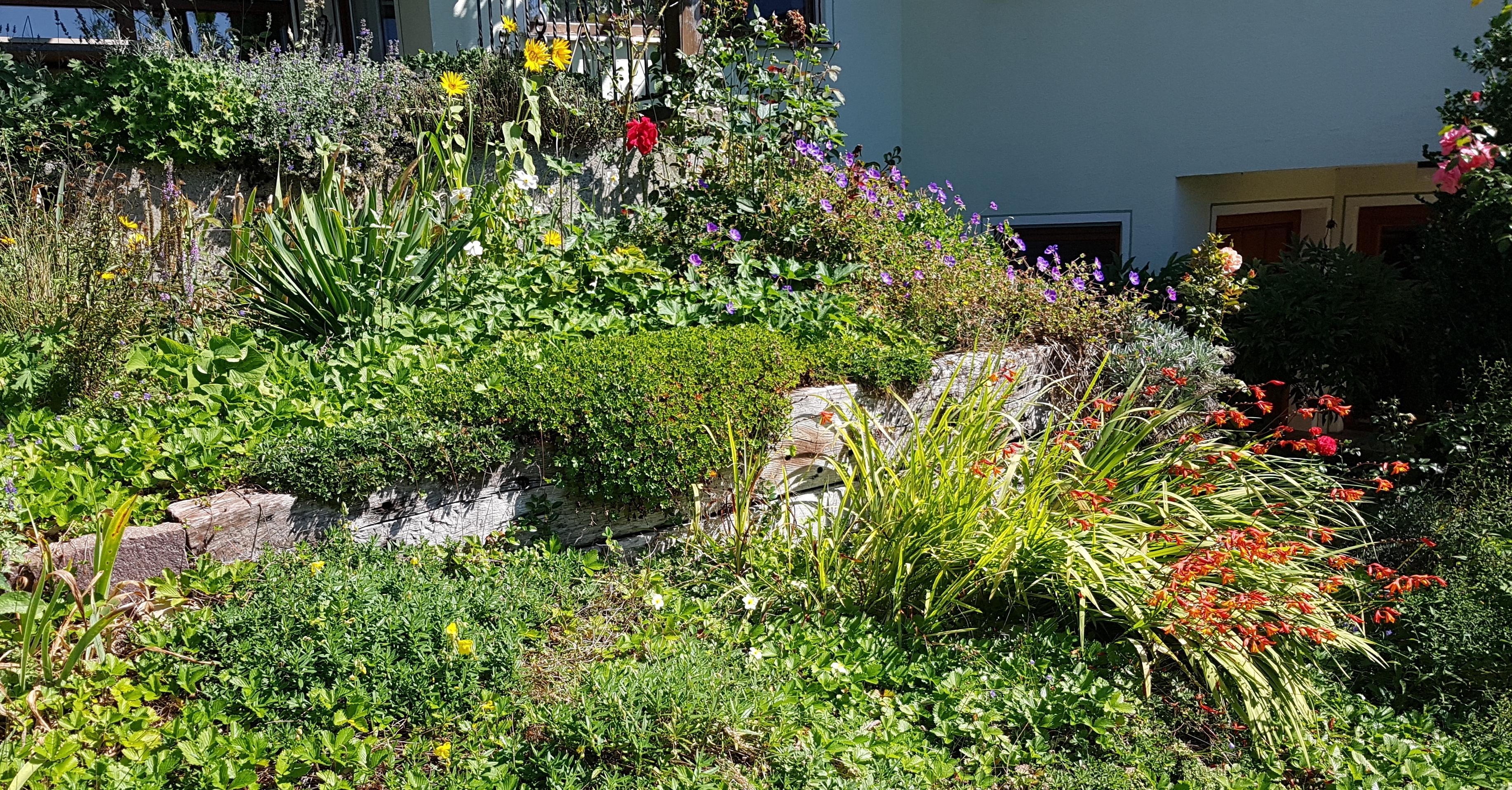 Im September blüht der Trockenhang üppiger, als im August