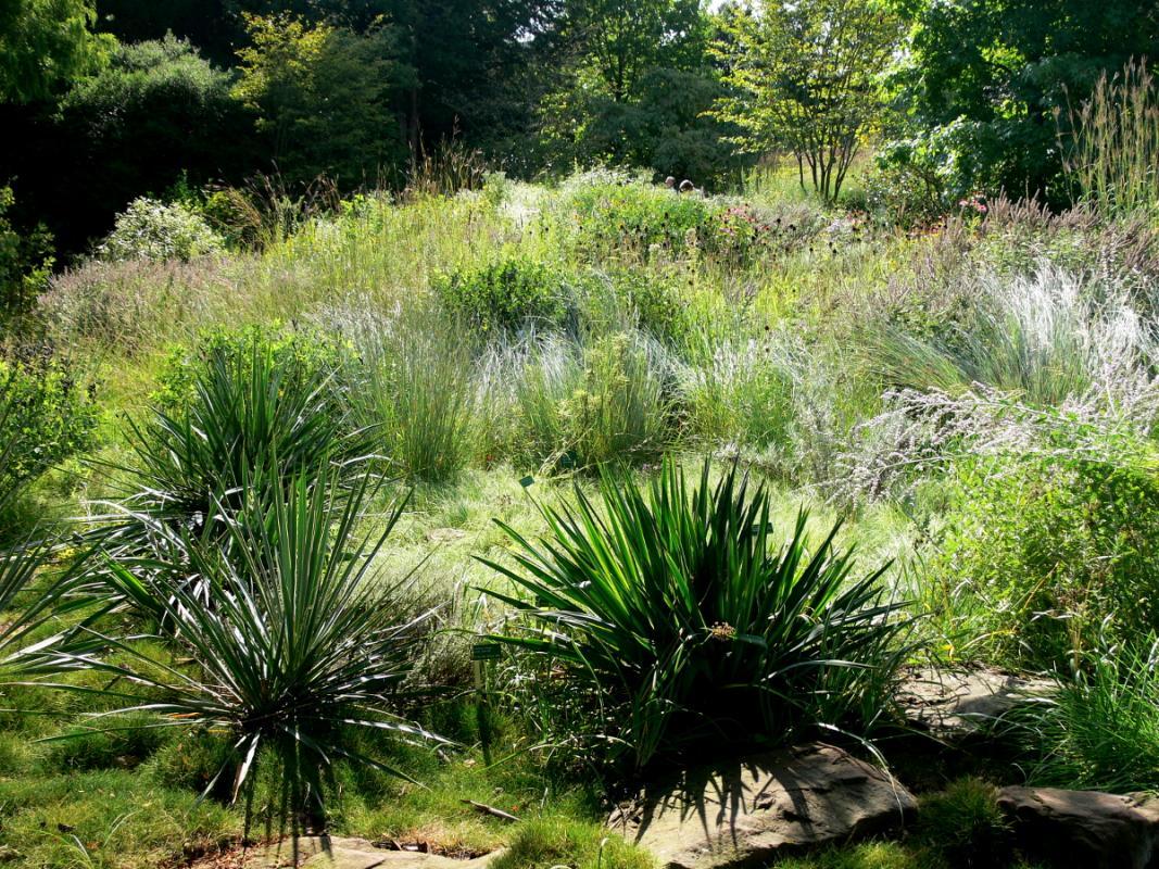 Yucca Pflanzung